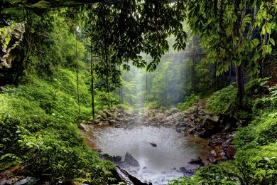 Escape the summer heat at Dorrigo National Park Crystal falls